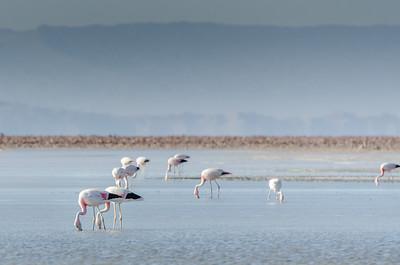 Chaxa Lagoon and Flamingo Reserve