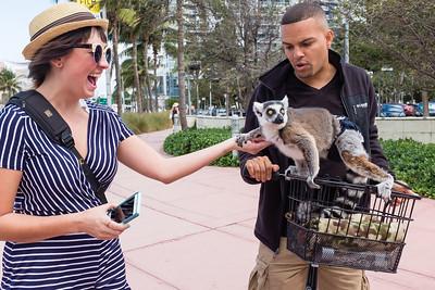 Isabella con Lemur, South Beach